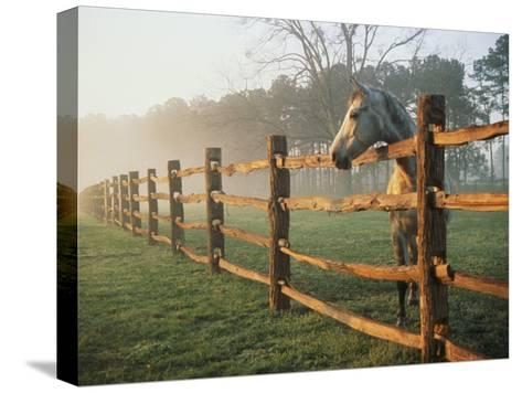 A Horse Watches the Mist Roll in over the Fields-Richard Nowitz-Stretched Canvas Print