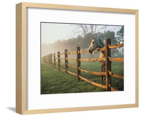 A Horse Watches the Mist Roll in over the Fields-Richard Nowitz-Framed Art Print
