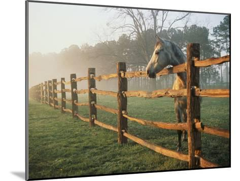 A Horse Watches the Mist Roll in over the Fields-Richard Nowitz-Mounted Photographic Print
