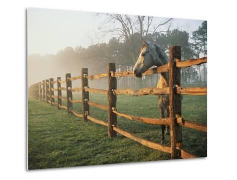 A Horse Watches the Mist Roll in over the Fields-Richard Nowitz-Metal Print