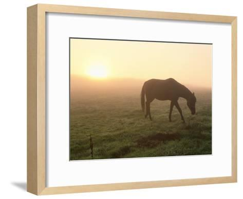 A Horse Grazes in a Field in Umbria-Tino Soriano-Framed Art Print