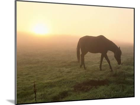A Horse Grazes in a Field in Umbria-Tino Soriano-Mounted Photographic Print