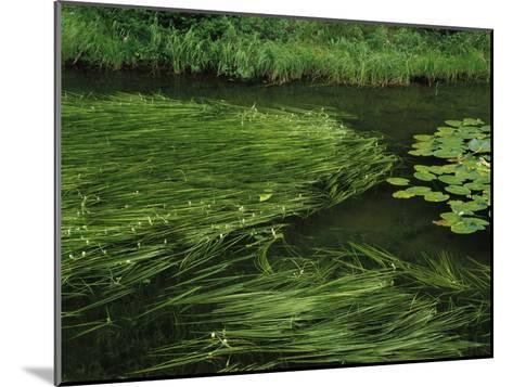 Marsh Grasses and Pond Lilies, Isa Lake on the Continental Divide-Raymond Gehman-Mounted Photographic Print
