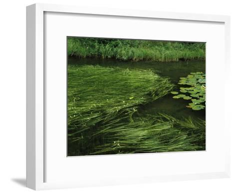 Marsh Grasses and Pond Lilies, Isa Lake on the Continental Divide-Raymond Gehman-Framed Art Print