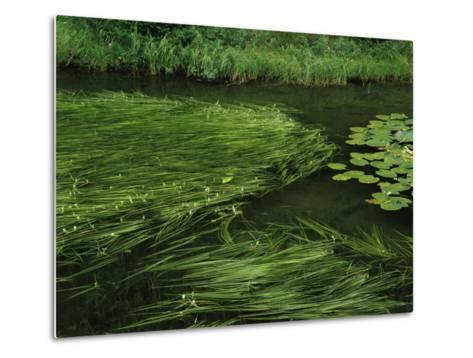 Marsh Grasses and Pond Lilies, Isa Lake on the Continental Divide-Raymond Gehman-Metal Print
