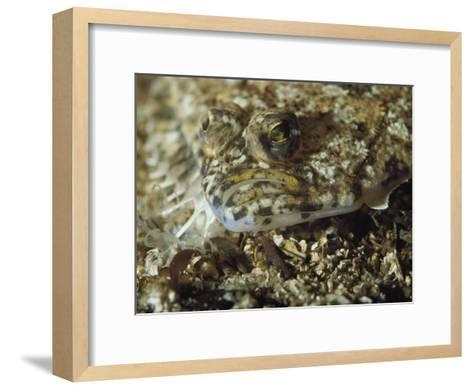 A Close View of a Well-Camouflaged Flounder-Bill Curtsinger-Framed Art Print