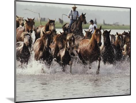 Chincoteague Cowboys Drive Their Wild Ponies to Auction-Medford Taylor-Mounted Photographic Print