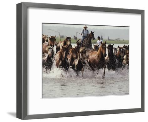 Chincoteague Cowboys Drive Their Wild Ponies to Auction-Medford Taylor-Framed Art Print