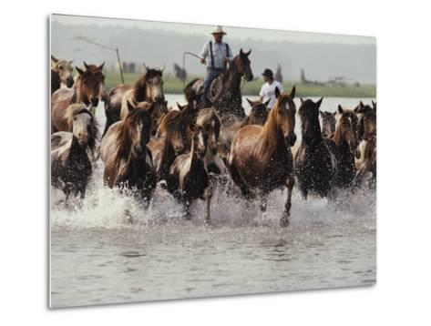 Chincoteague Cowboys Drive Their Wild Ponies to Auction-Medford Taylor-Metal Print