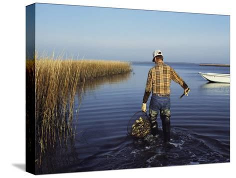 A Clam Digger Carries His Haul Through Chincoteague Island Marshes-Medford Taylor-Stretched Canvas Print