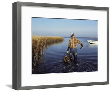 A Clam Digger Carries His Haul Through Chincoteague Island Marshes-Medford Taylor-Framed Art Print