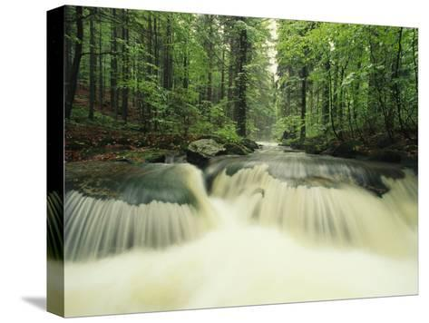 Waterfall Time Exposure, Bayerischer Wald National Park, Germany-Norbert Rosing-Stretched Canvas Print