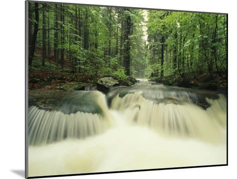 Waterfall Time Exposure, Bayerischer Wald National Park, Germany-Norbert Rosing-Mounted Photographic Print