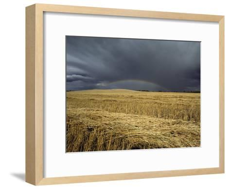 Storm Clouds and a Rainbow over a Manitoba Wheat Field-Medford Taylor-Framed Art Print
