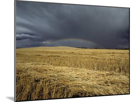 Storm Clouds and a Rainbow over a Manitoba Wheat Field-Medford Taylor-Mounted Photographic Print