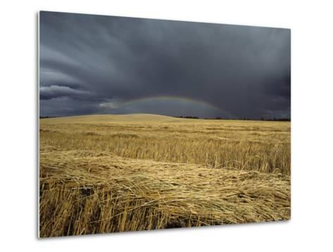 Storm Clouds and a Rainbow over a Manitoba Wheat Field-Medford Taylor-Metal Print