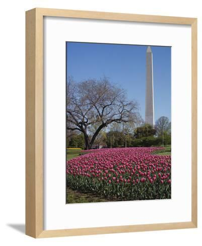 A Bed of Spring Tulips Near the Washington Monument-Medford Taylor-Framed Art Print