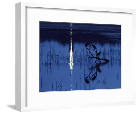 Herons Silhouetted on a Branch in a Chincoteague Marsh-Medford Taylor-Framed Art Print