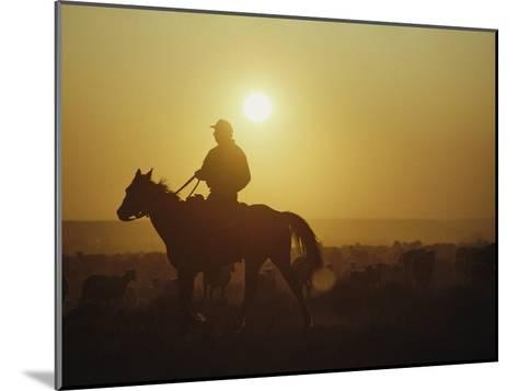 A Rancher Rounds up Sheep on a Wyoming Farm-Joel Sartore-Mounted Photographic Print