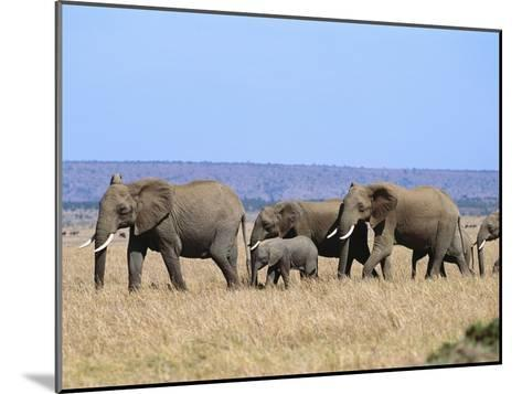 A Group of African Elephants-Norbert Rosing-Mounted Photographic Print