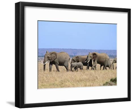 A Group of African Elephants-Norbert Rosing-Framed Art Print