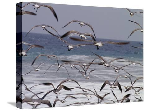 Seagulls Fly over Surf-Raul Touzon-Stretched Canvas Print
