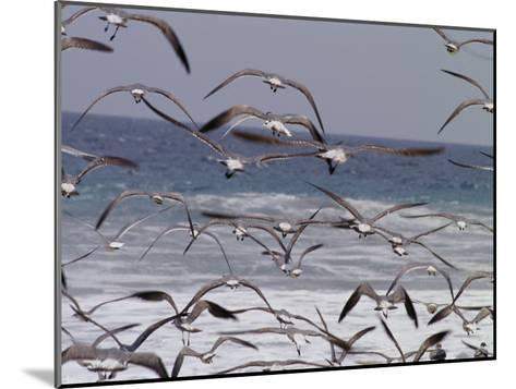 Seagulls Fly over Surf-Raul Touzon-Mounted Photographic Print