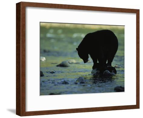 Black Bear Perched on Rock Watching for Fish-Joel Sartore-Framed Art Print