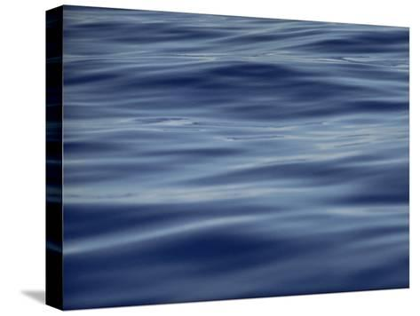 View of Calm Blue Water off the Coast of the Hawaiian Islands-Bill Curtsinger-Stretched Canvas Print