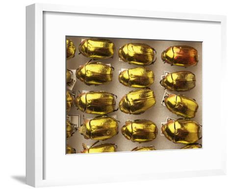 Beetle Specimens in a Lab of the National Biodiversity Institute-Steve Winter-Framed Art Print