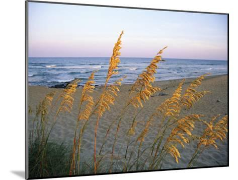 Beach Scene with Sea Oats-Steve Winter-Mounted Photographic Print