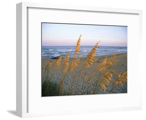 Beach Scene with Sea Oats-Steve Winter-Framed Art Print