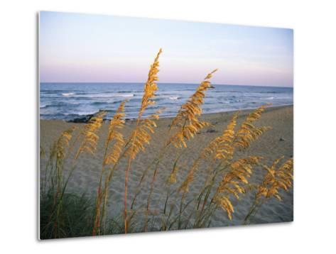 Beach Scene with Sea Oats-Steve Winter-Metal Print