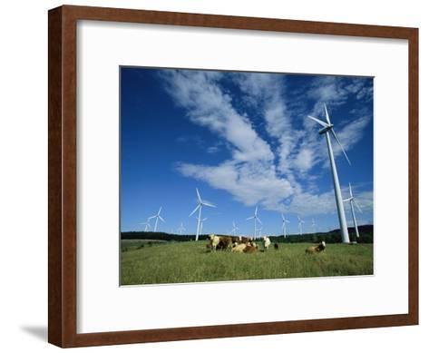 Cattle Graze Around Windmills-Steve Winter-Framed Art Print
