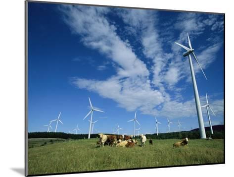 Cattle Graze Around Windmills-Steve Winter-Mounted Photographic Print