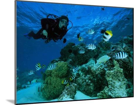 Diver Swimming with Butterfly Fish and Scissor-Tail Sergeants-Tim Laman-Mounted Photographic Print