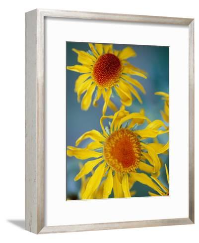 A Close View of Two Daisies-Raul Touzon-Framed Art Print