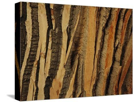 Close View of Bark on an Old Growth Cottonwood Tree-Raymond Gehman-Stretched Canvas Print