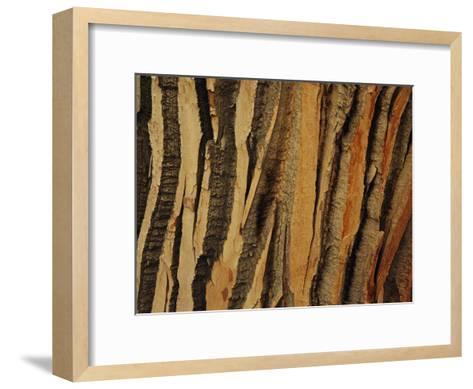 Close View of Bark on an Old Growth Cottonwood Tree-Raymond Gehman-Framed Art Print