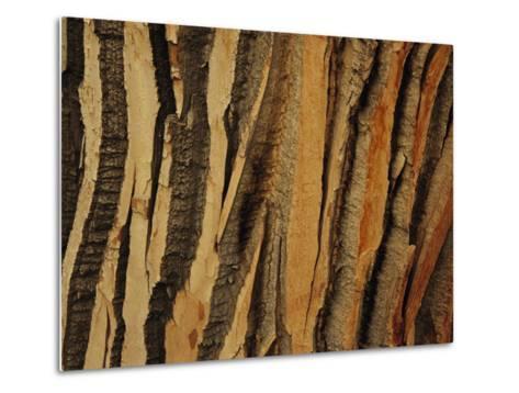 Close View of Bark on an Old Growth Cottonwood Tree-Raymond Gehman-Metal Print