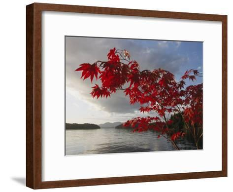 A Maple Tree in Fall Foliage Frames a View of Barnard Harbour-Richard Nowitz-Framed Art Print