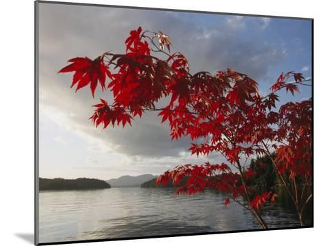 A Maple Tree in Fall Foliage Frames a View of Barnard Harbour-Richard Nowitz-Mounted Photographic Print
