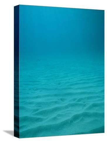 Underwater Shot of Clear Blue Water off of the Virgin Islands-Raul Touzon-Stretched Canvas Print