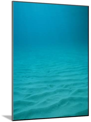 Underwater Shot of Clear Blue Water off of the Virgin Islands-Raul Touzon-Mounted Photographic Print