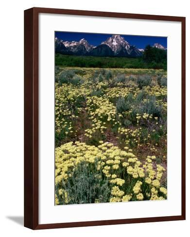 Wildflowers in Summer with Mountains in Distance, Grand Teton National Park, USA-Carol Polich-Framed Art Print