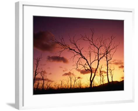 Dead Trees Silhouetted at Sunset, Airlie Beach, Queensland, Australia-John Banagan-Framed Art Print