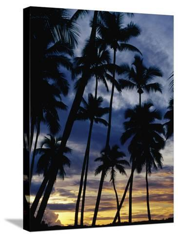 Palm Trees Silhouetted at Sunset, Fiji-Richard I'Anson-Stretched Canvas Print