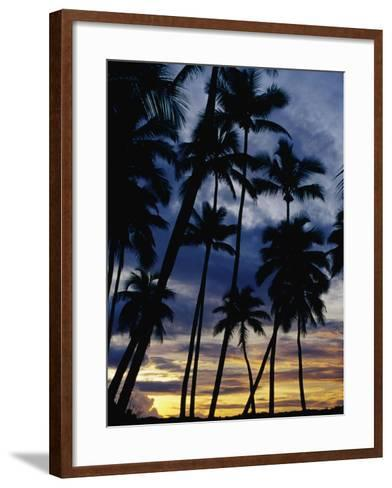 Palm Trees Silhouetted at Sunset, Fiji-Richard I'Anson-Framed Art Print