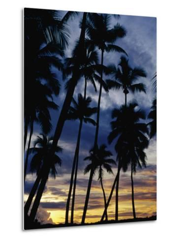 Palm Trees Silhouetted at Sunset, Fiji-Richard I'Anson-Metal Print