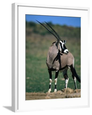 Gemsbok or South African Oryx, Kgalagadi Transfrontier Park, Northern Cape, South Africa-Carol Polich-Framed Art Print